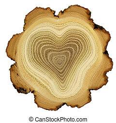 coração, -, seção, anéis, crucifixos, árvore, crescimento, acácia