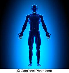corporal, azul, cheio, conce, -, vista dianteira
