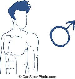 corporal, desenhar, macho