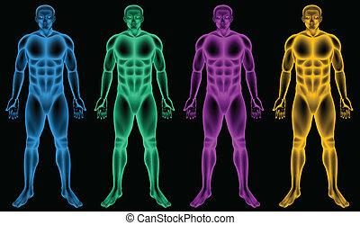 corpos, macho, colorido