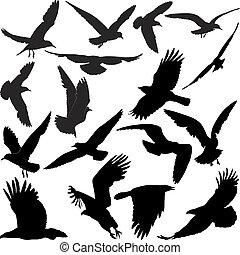 corvo, falcão, corvo, gaivotas, águia