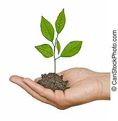 crescendo, árvore, mão, solo
