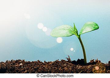 crescendo, chão, verde, rain., seedling