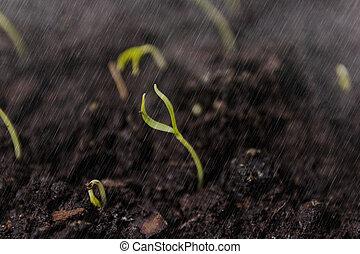 crescendo, chão, verde, seedling