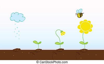crescendo, fases, flor