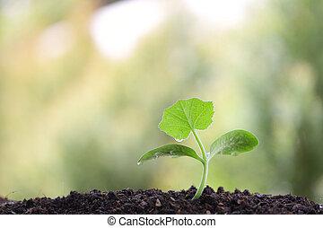 crescendo, luz, árvore pequena, manhã