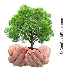 crescendo, mãos, árvore