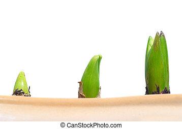 crescendo, plantas, três
