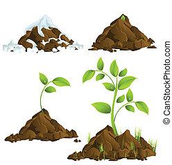 crescendo, plantas