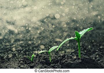 crescendo, seedling, chão