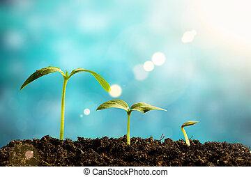 crescendo, verde, seedling