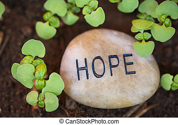crescimento novo, esperança