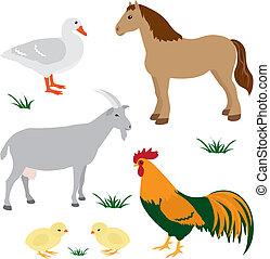 cultive animais, 2, jogo