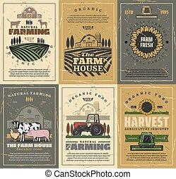 cultive animais, campo, barn., agricultura, trator