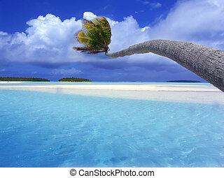 curvatura, palma, lagoa