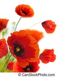 decoração, -, flores, papoulas, floral, canto, borda, desenho