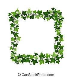decorativo, foliage, isolado, hedera, videira, vetorial, branca, experiência., quadro, ilustração, hera, natural, grinalda, quadrado, creeper, element., borda, planta, botânico, verde, desenho
