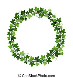 decorativo, isolado, hedera, videira, vetorial, círculo branco, experiência., quadro, ilustração, hera, redondo, grinalda, creeper, element., borda, planta, botânico, verde, desenho