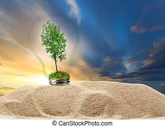 dentro, árvore, lâmpada, areia, verde, pôr do sol, cinza