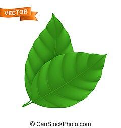 desenho, folha verde, elemento, lata, usado, guarnecido suportes, dois, ilustração, ser, detalhado, ícone, fundo, teia, eco, isolado, branca, vetorial, folhas, ou