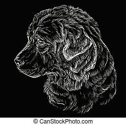 desenho, mão, pastor, caucasiano, vetorial, retrato, cão, pretas