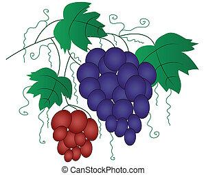 desenho, uva, ramo, elemento