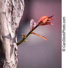 desenvolvimento, conceito, ramos, negócio, expandindo, árvore, crescimento, trunk., crescendo, novo, futuro, vermelho