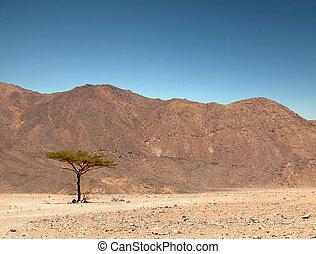 desert., contra, árvore, só, azul, penhascos, verde, fundo, sky.