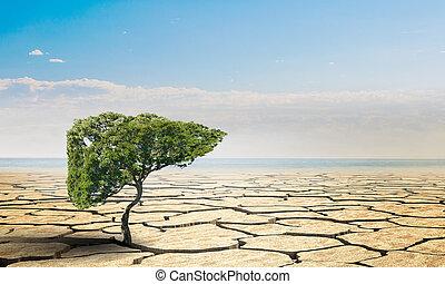 deserto, árvore, verde, só