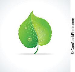 detalhado, folha, illustration., vetorial, verde, lustroso
