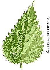 detalhado, folha verde