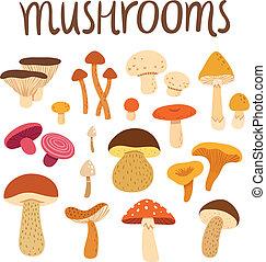 diferente, jogo, ilustração, cogumelos, vetorial, tipos