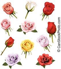 diferente, jogo, roses., vector.
