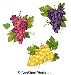 diferente, variedades, uvas
