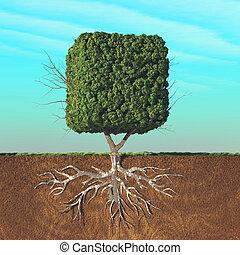 dividido, árvore, cubical