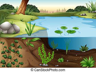 ecosytem, lagoa
