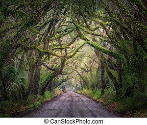 edisto, carvalho, túnel, ilha, árvore
