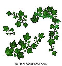 elementos, isolado, redemoinho, branches., decorativo, folhas, verde, floral, jogo, garnads, vetorial, escalando, hera, plants., ilustração, branca, experiência.