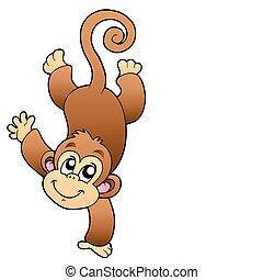 engraçado, macaco, cute