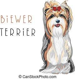 engraçado, sentando, biewer, cão, yorkshire, vetorial, terrier