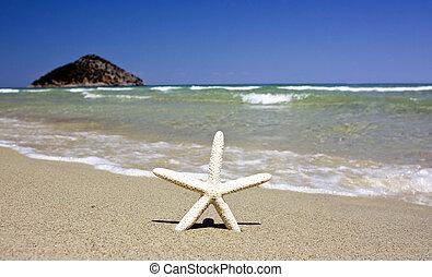 ensolarado, praia, starfish, verão