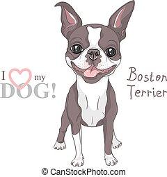 esboço, boston, raça, cão, vetorial, sorrindo, terrier