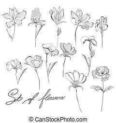 esboço, flores