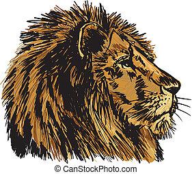 esboço, grande, ilustração, lion., vetorial, macho africano
