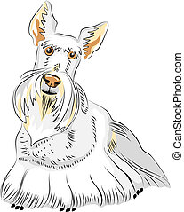 escocês, vetorial, esboço, cão, raça, cor, terrier