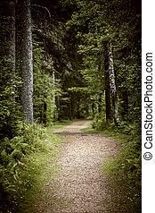 escuro, caminho, floresta, mal-humorado