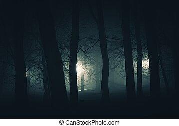 escuro, spooky, parque