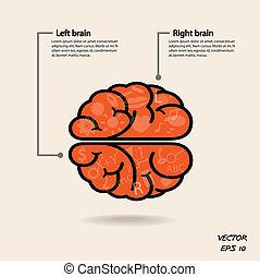 esquerda, criatividade, negócio, conhecimento, cérebro, ícone, direita, sinal, símbolo, educação