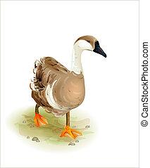 estilo, andar, goose., aquarela, doméstico