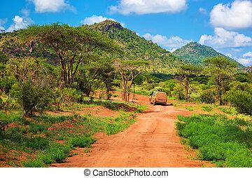 estrada, áfrica, oeste, bush, savanna., chão, tsavo, kenya, vermelho